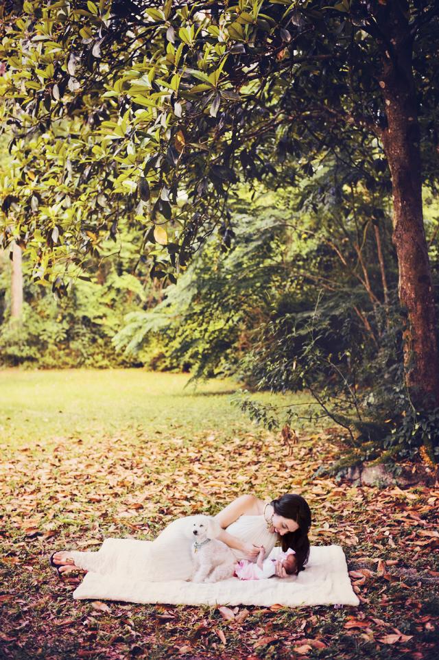 Magnolia-Tree-blog